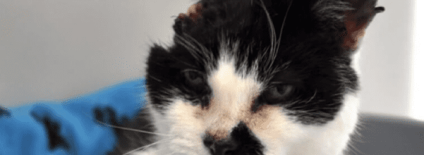 Cat with only half a head