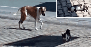 dog rescues injured cat