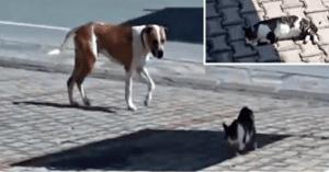 dog rescues injured cat