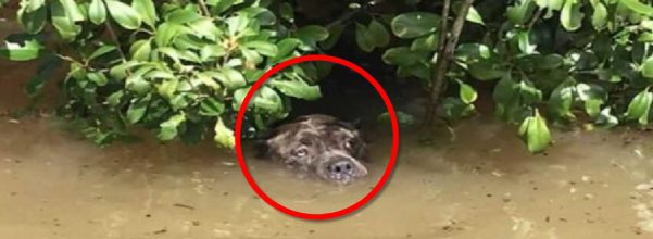 hero rescues drowning dog