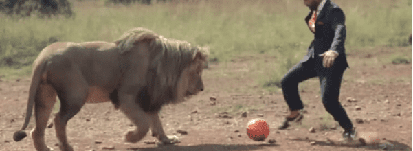man plays football with lions