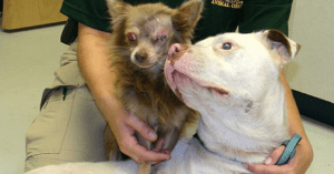 stray dog saves another stray dog