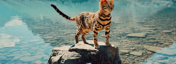 Suki, the traveling cat