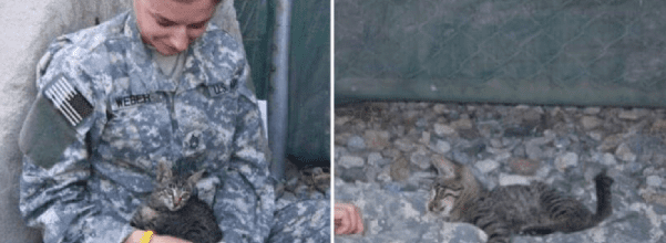 Soldier saves special needs kitten