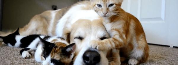 Kitty won't let dog sleep