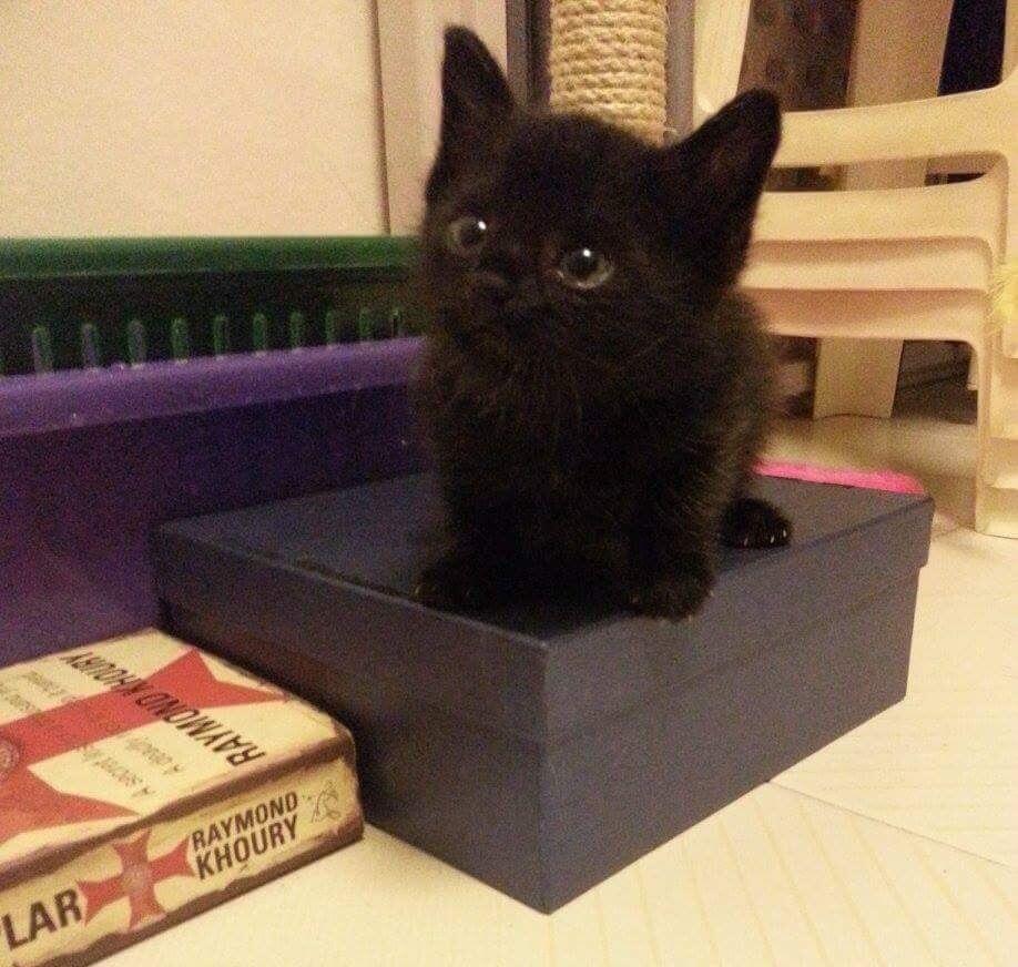 overly aggressive kitten