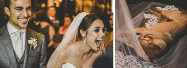 stray dog crashes wedding