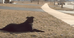 dog waits for bus every day