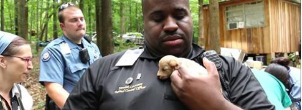 526 puppies rescued
