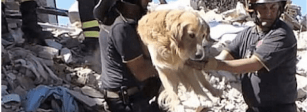 dog rescued 9 days after earthquake