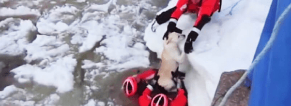 Coast Guard saves pup from icy waters