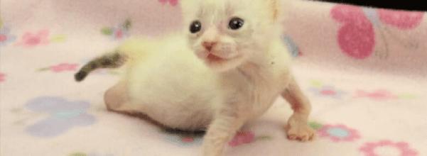 deformed kittens rescued
