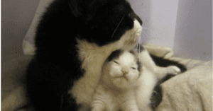 abused pregnant cat gives birth