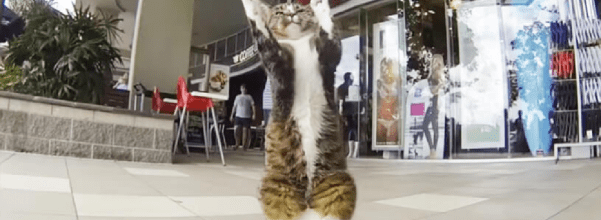 talented kitty