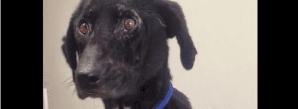 ugly dog dumped