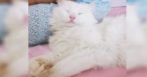 kitty has amazing eyes
