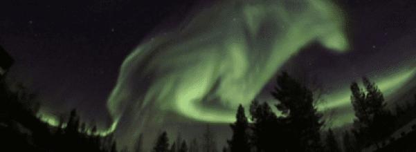 northern lights wolf