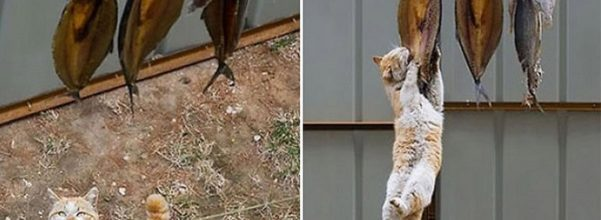 cats caught stealing