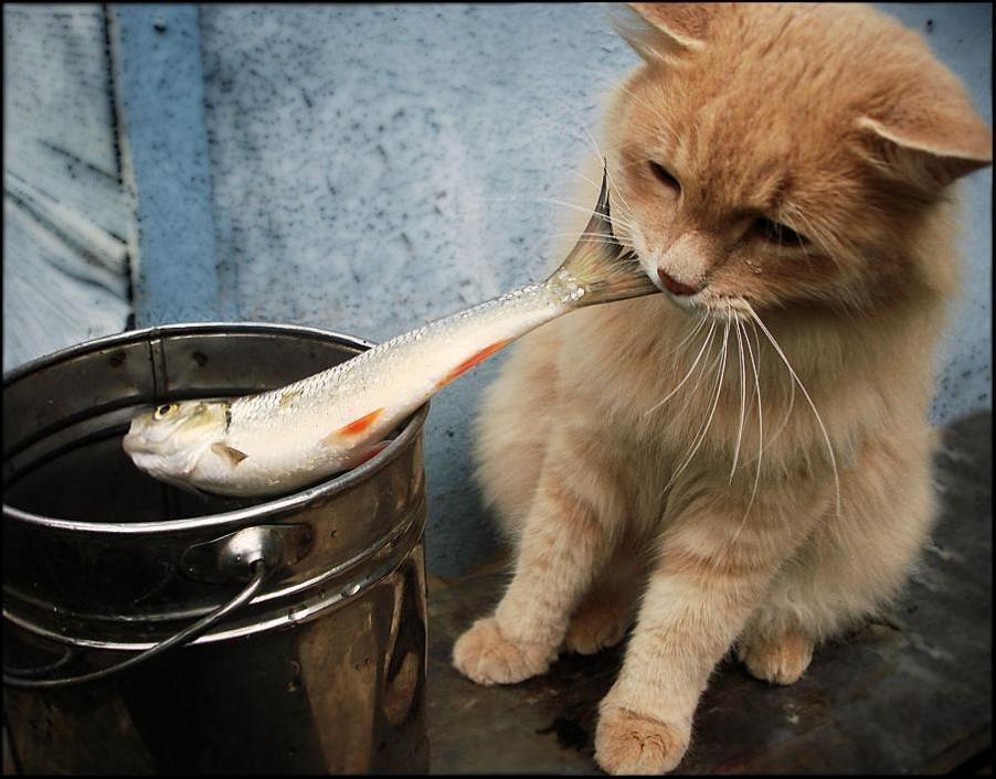 картинки люблю рыбку кушать комод гостиную классическом