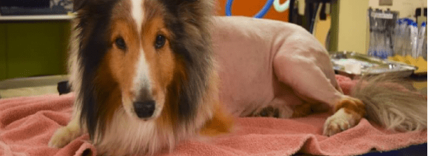 Vet saved paralyzed dog from euthanasia