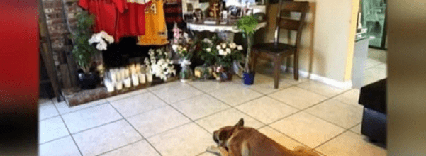 dog mourns his owner