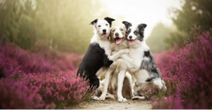 Heartwarming dog portraits