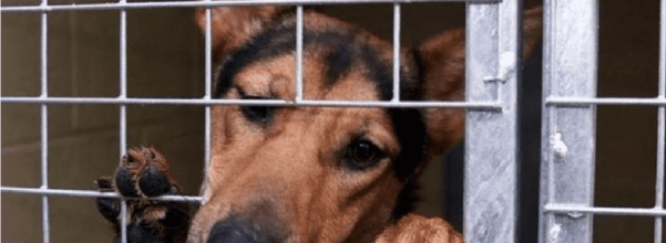 Animal cruelty rises to five years in prison