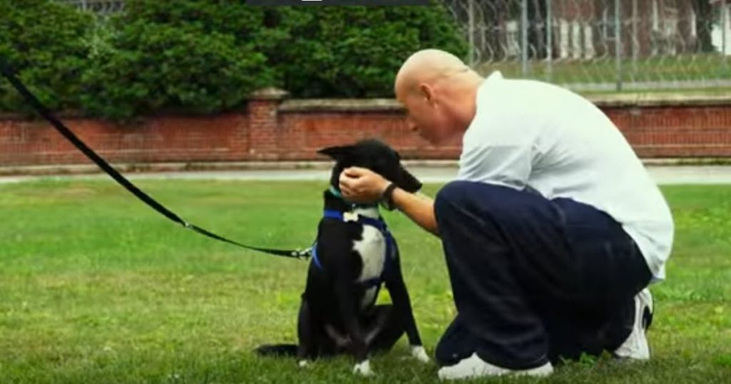 prison therapy dogs