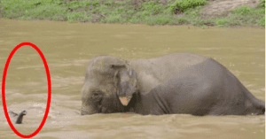 Elephant saved from rushing waters