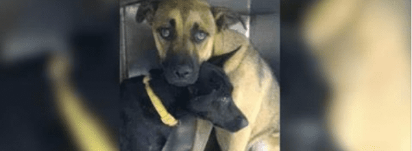 bonded dogs rescued together
