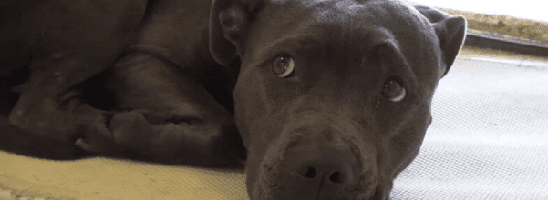 Dog surrendered when owners move