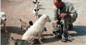 Marine rescues dog from Iraq
