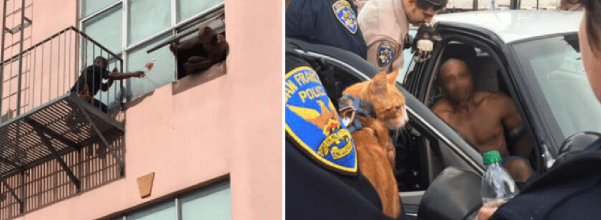 cat stops man from suicide