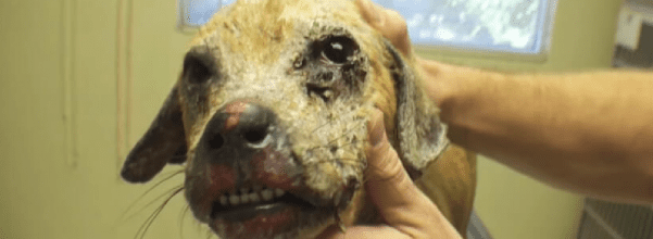 dog found in terrible condition