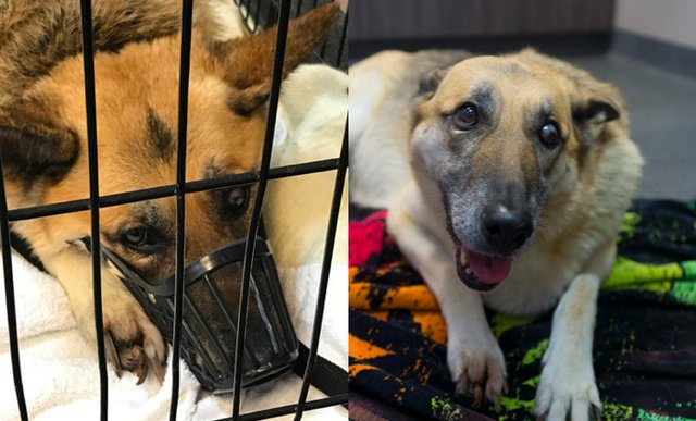 Former Puppy Mill Dog Rescued And Is Finally Being Treated Like A