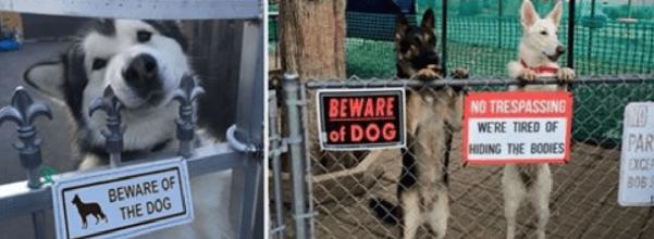 beware of dog pets