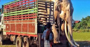 elephant finally free