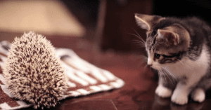 kitten and hedgehog