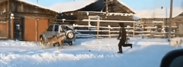 hunters save deer being attacked