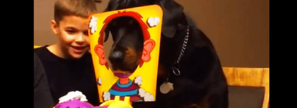 dog plays pie in the face game