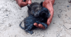 man rescues kittens from oil spill