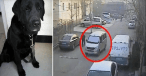 thieves return stolen seeing-eye dog
