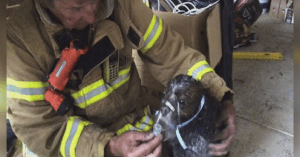 firefighters saved family dog