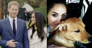Meghan Markle rescue dog