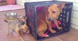 mama dog seven puppies