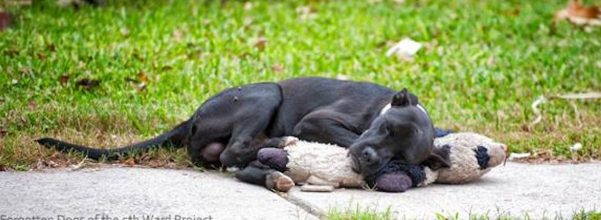 viral dog sleeping stuffed animal rescue