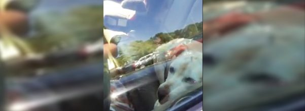 dog rescued from overheated car