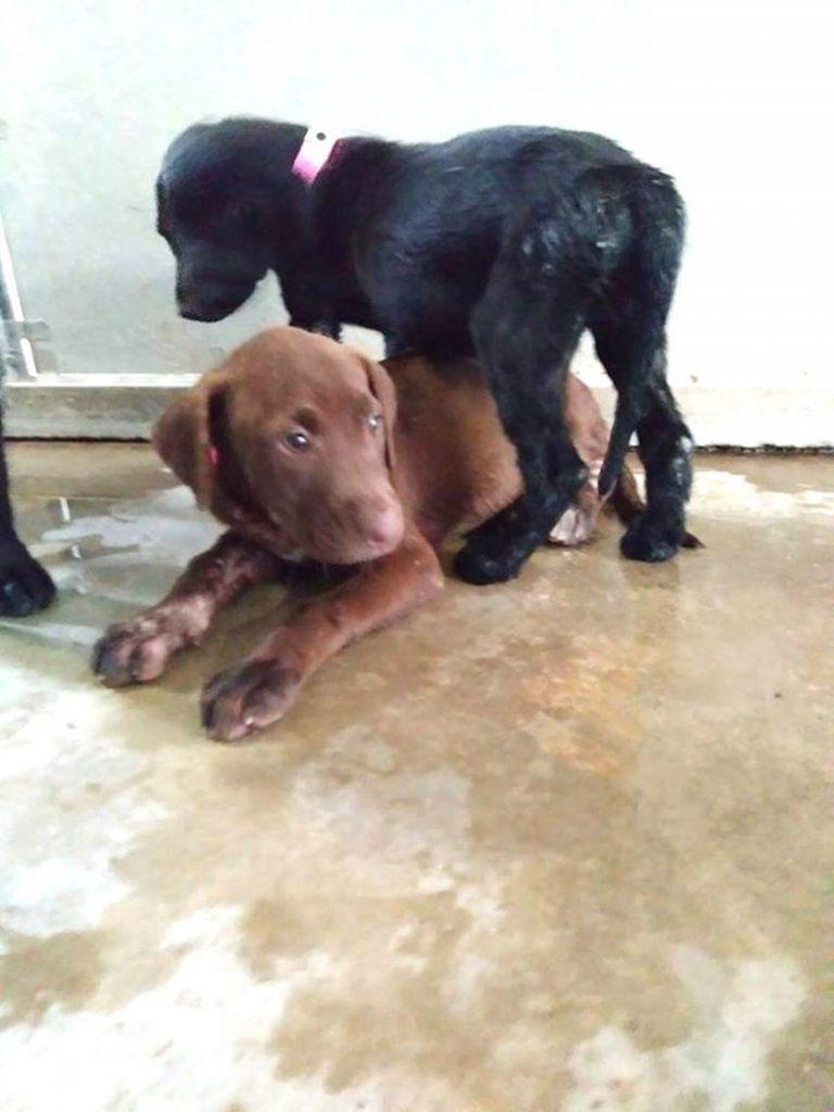 dogs hurricane harvey hero