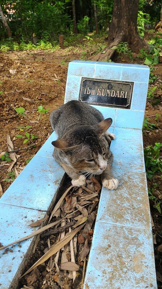 kitty won't leave grave
