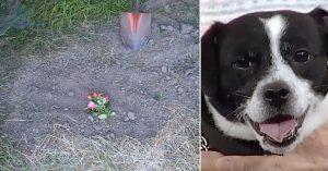 mugsy grave miracle